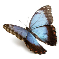 butterfly symbolizes transformation from nutrition and psychotherapy