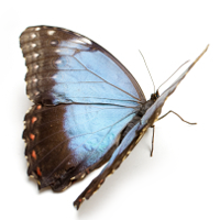 butterfly symbolises metamorphis in nutrition and psychotherapy